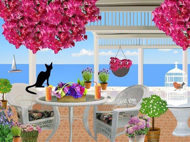 kočka na verandě